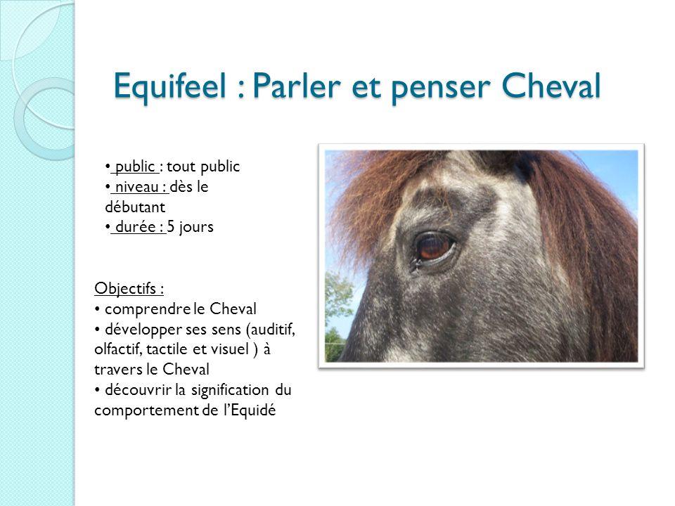 Equifeel : Parler et penser Cheval public : tout public niveau : dès le débutant durée : 5 jours Objectifs : comprendre le Cheval développer ses sens