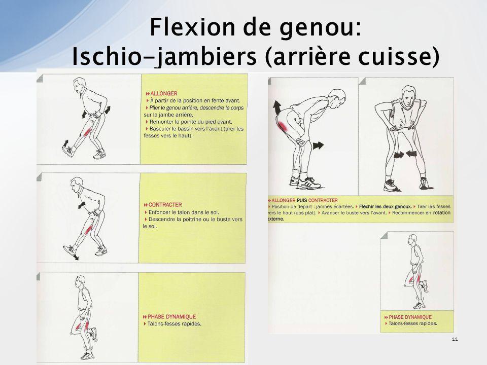 12 Extension de genou: Quadriceps (avant cuisse)