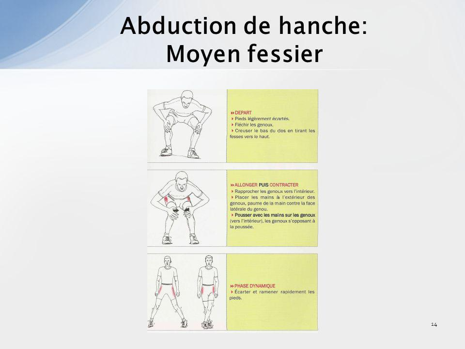 14 Abduction de hanche: Moyen fessier
