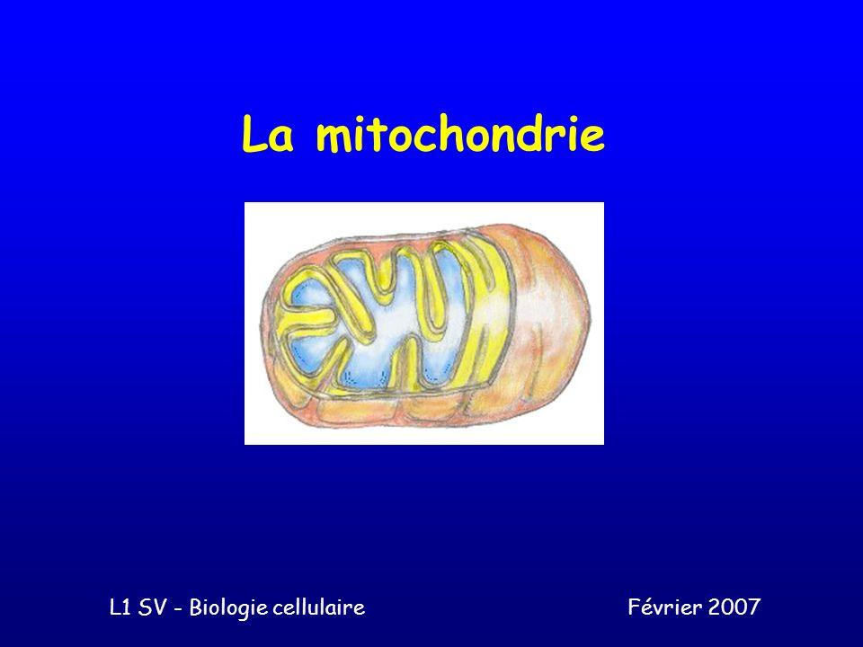 La mitochondrie L1 SV - Biologie cellulaireFévrier 2007