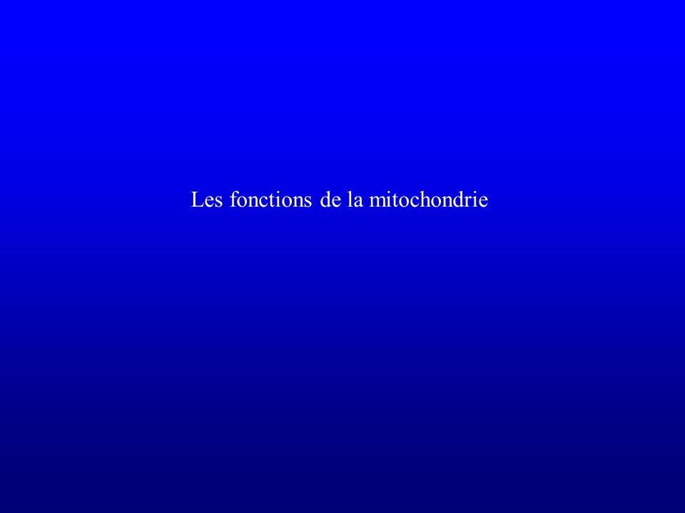 Les fonctions de la mitochondrie