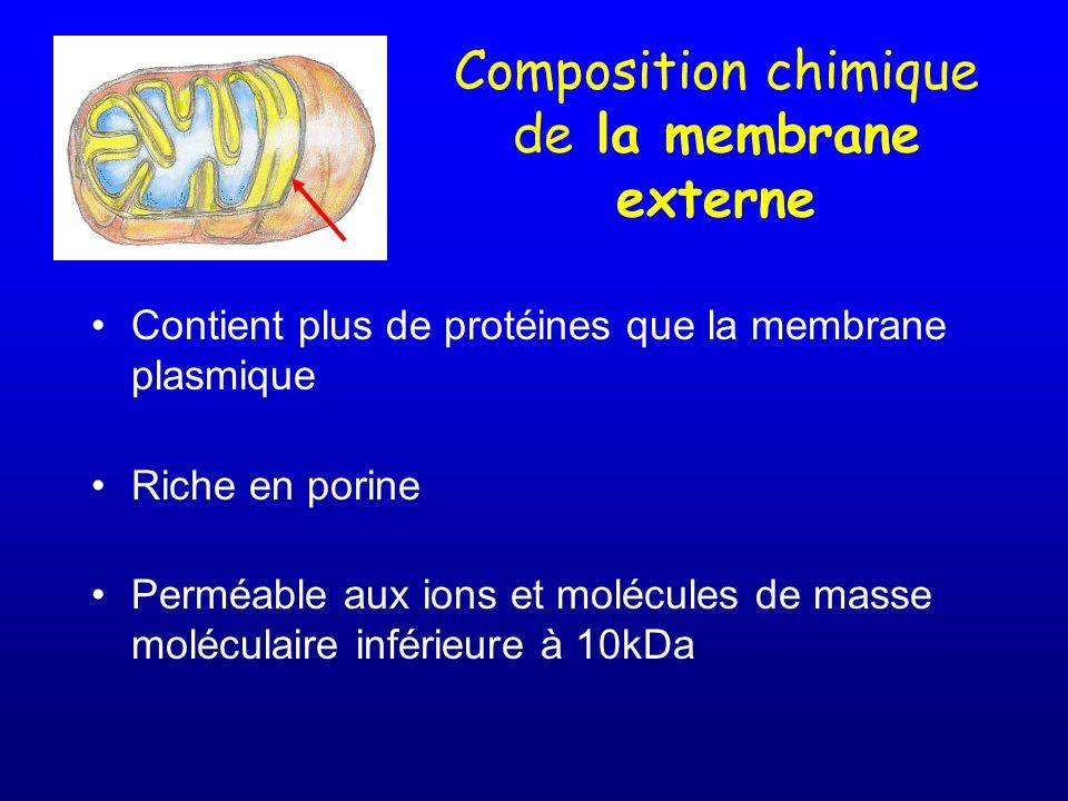 Composition chimique de la membrane externe Contient plus de protéines que la membrane plasmique Riche en porine Perméable aux ions et molécules de ma