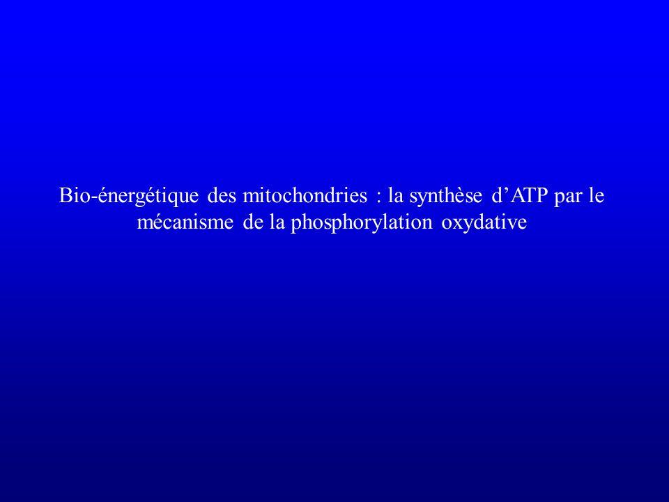 Bio-énergétique des mitochondries : la synthèse dATP par le mécanisme de la phosphorylation oxydative