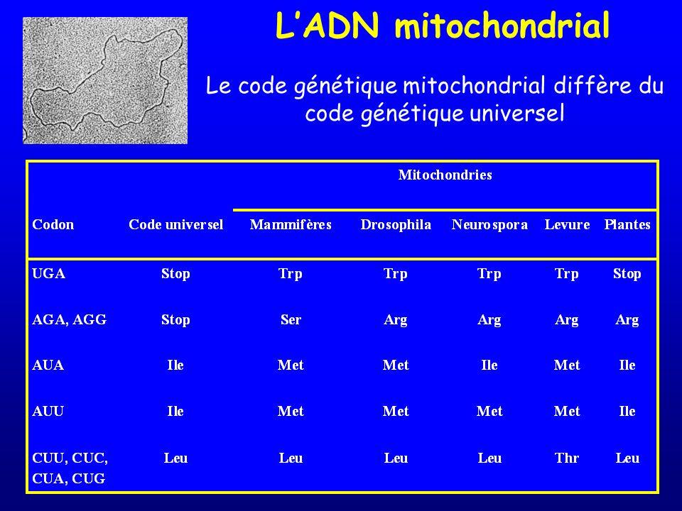 LADN mitochondrial Le code génétique mitochondrial diffère du code génétique universel