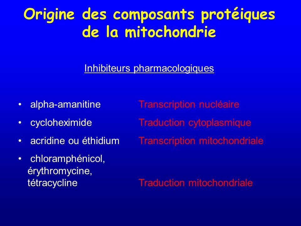Origine des composants protéiques de la mitochondrie Inhibiteurs pharmacologiques alpha-amanitineTranscription nucléaire cycloheximideTraduction cytop
