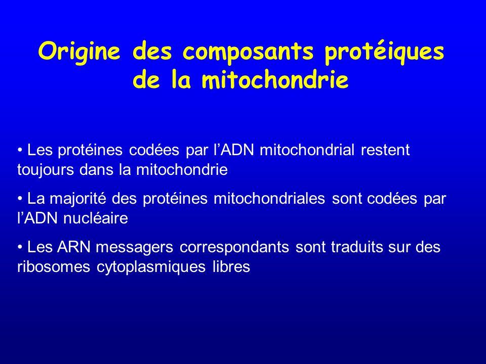 Origine des composants protéiques de la mitochondrie Les protéines codées par lADN mitochondrial restent toujours dans la mitochondrie La majorité des