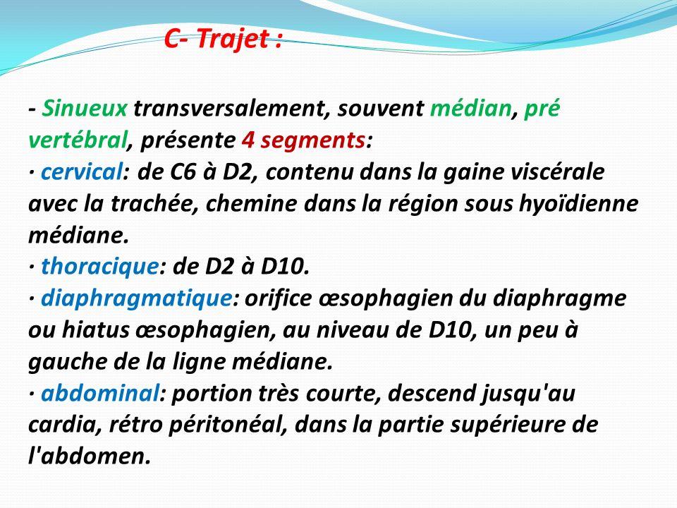 C- Trajet : - Sinueux transversalement, souvent médian, pré vertébral, présente 4 segments: · cervical: de C6 à D2, contenu dans la gaine viscérale av