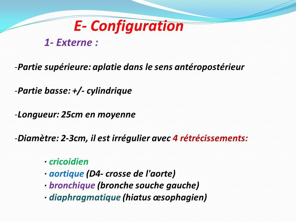 E- Configuration 1- Externe : -Partie supérieure: aplatie dans le sens antéropostérieur -Partie basse: +/- cylindrique -Longueur: 25cm en moyenne -Dia