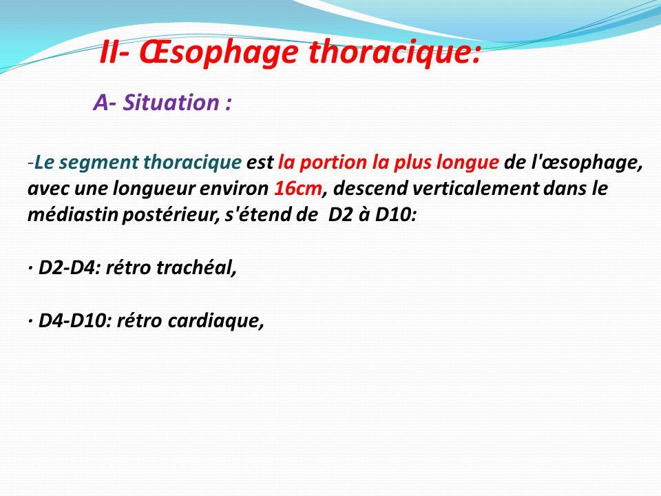 II- Œsophage thoracique: A- Situation : -Le segment thoracique est la portion la plus longue de l'œsophage, avec une longueur environ 16cm, descend ve