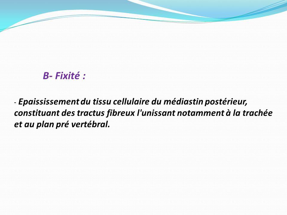 B- Fixité : - Epaississement du tissu cellulaire du médiastin postérieur, constituant des tractus fibreux l'unissant notamment à la trachée et au plan