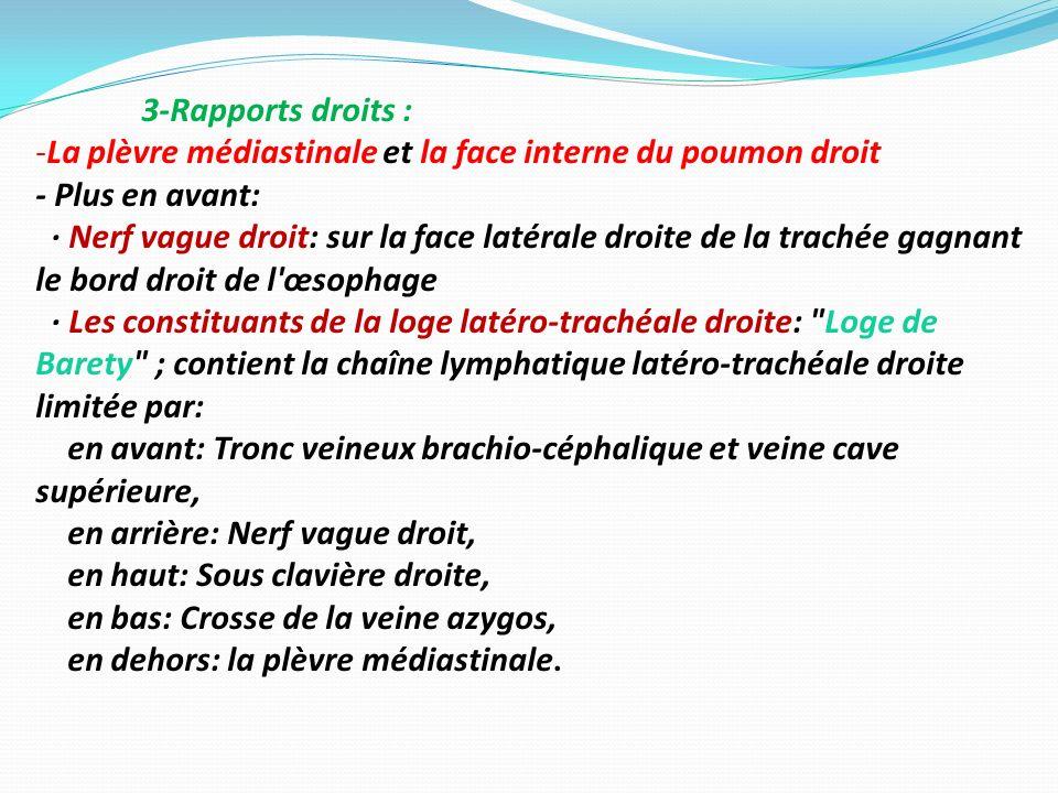 3-Rapports droits : -La plèvre médiastinale et la face interne du poumon droit - Plus en avant: · Nerf vague droit: sur la face latérale droite de la