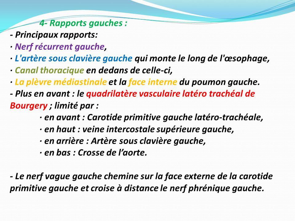 4- Rapports gauches : - Principaux rapports: · Nerf récurrent gauche, · L'artère sous clavière gauche qui monte le long de l'œsophage, · Canal thoraci