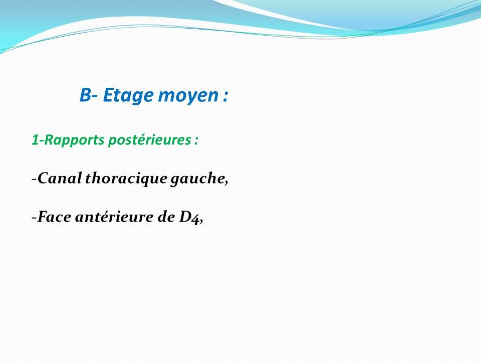 B- Etage moyen : 1-Rapports postérieures : -Canal thoracique gauche, -Face antérieure de D4,
