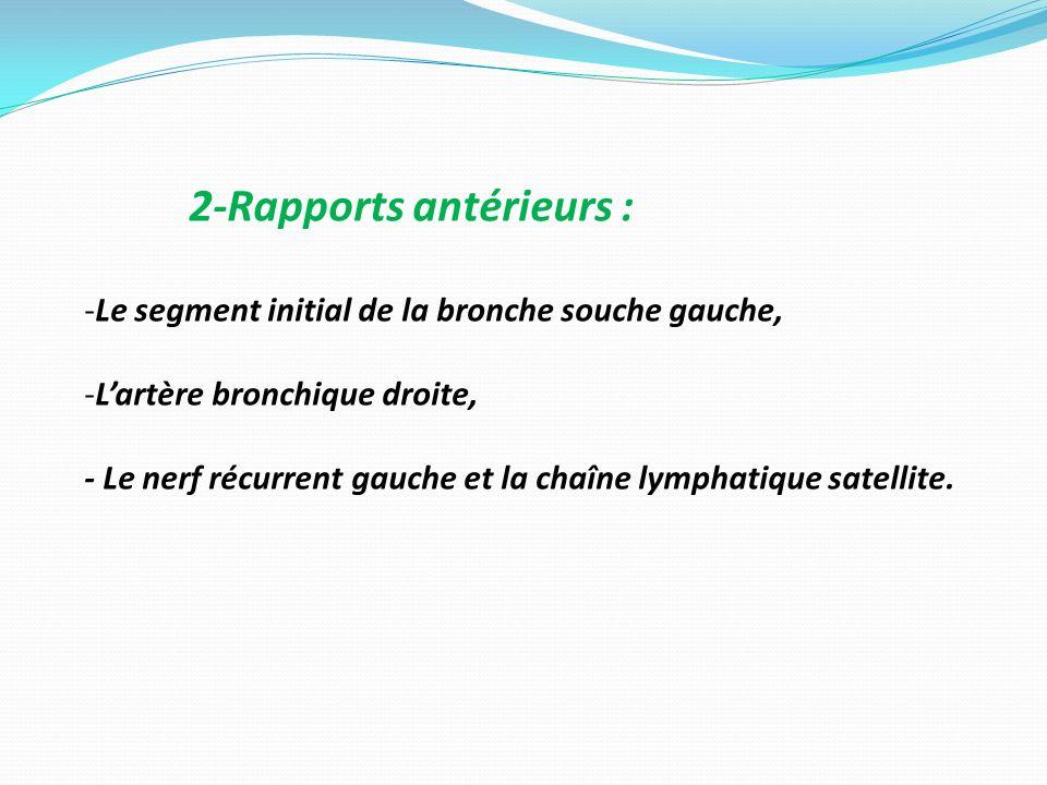 2-Rapports antérieurs : -Le segment initial de la bronche souche gauche, -Lartère bronchique droite, - Le nerf récurrent gauche et la chaîne lymphatiq