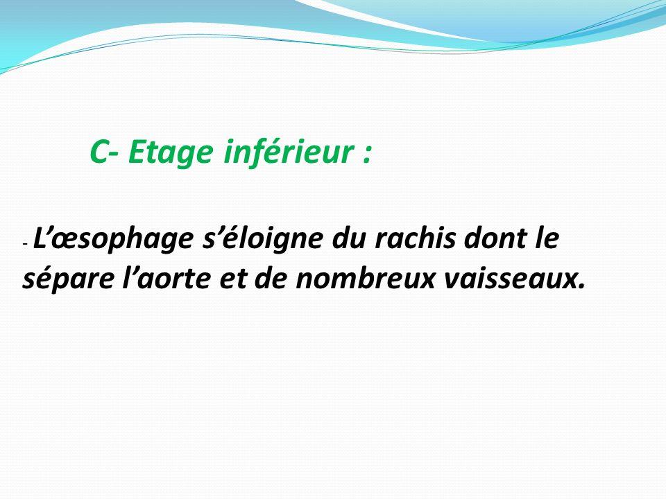 C- Etage inférieur : - Lœsophage séloigne du rachis dont le sépare laorte et de nombreux vaisseaux.