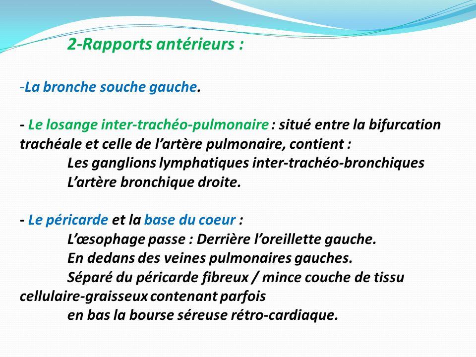 2-Rapports antérieurs : -La bronche souche gauche. - Le losange inter-trachéo-pulmonaire : situé entre la bifurcation trachéale et celle de lartère pu
