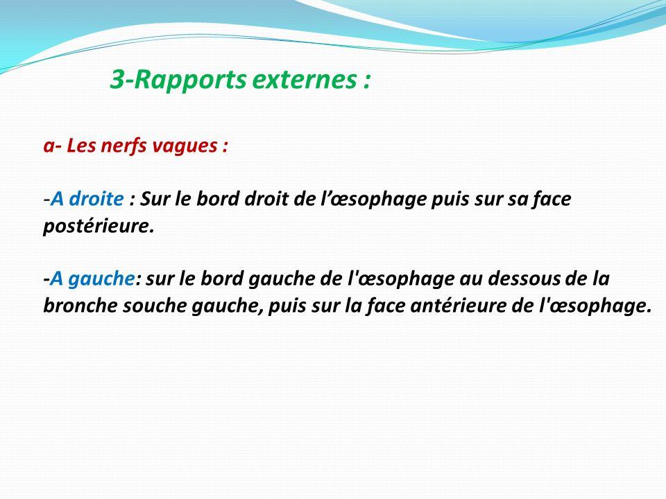 3-Rapports externes : a- Les nerfs vagues : -A droite : Sur le bord droit de lœsophage puis sur sa face postérieure. -A gauche: sur le bord gauche de