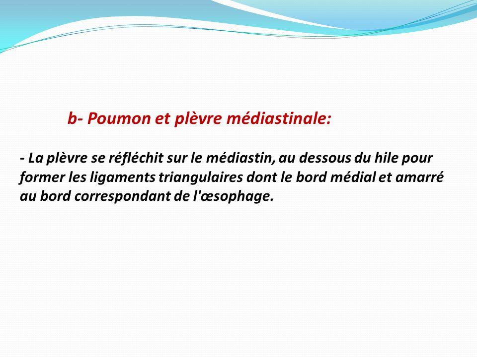b- Poumon et plèvre médiastinale: - La plèvre se réfléchit sur le médiastin, au dessous du hile pour former les ligaments triangulaires dont le bord m