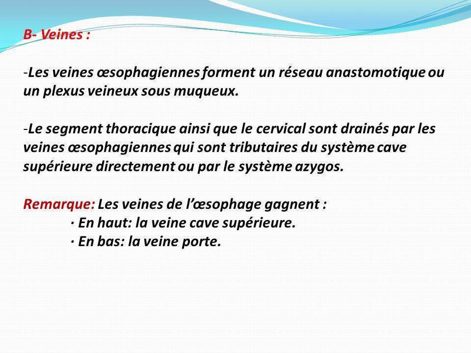 B- Veines : -Les veines œsophagiennes forment un réseau anastomotique ou un plexus veineux sous muqueux. -Le segment thoracique ainsi que le cervical