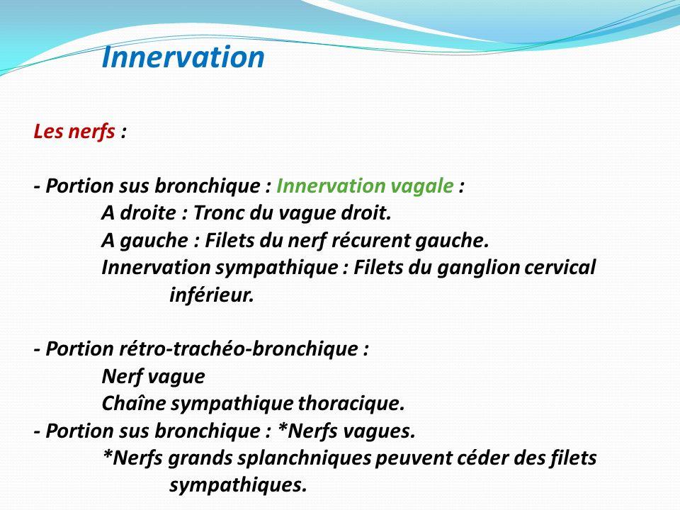 Innervation Les nerfs : - Portion sus bronchique : Innervation vagale : A droite : Tronc du vague droit. A gauche : Filets du nerf récurent gauche. In