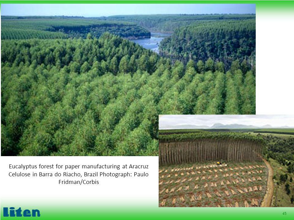 45 Eucalyptus forest for paper manufacturing at Aracruz Celulose in Barra do Riacho, Brazil Photograph: Paulo Fridman/Corbis