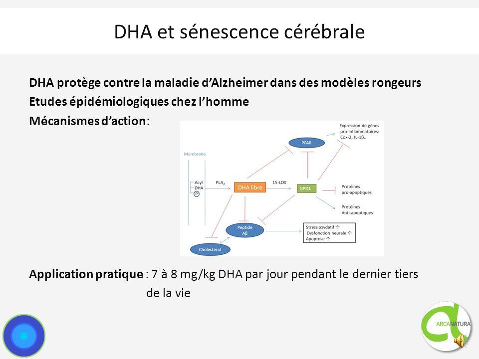 Signes cliniques : Désorientation Altération du cycle veille/sommeil Malpropreté Perte des habilités sociales Similarités physiopathologiques avec la maladie d Alzheimer chez lhomme : Perte de fluidité membranaire des neurones Altération de la neurotransmission Dépôts amyloïdes (peptide Aβ) Phénomènes oxydatifs Teneur en DHA du cerveau diminue avec lâge Teneur en DHA au niveau de lhippocampe inférieure chez les patients atteints de maladie d Alzheimer DHA et sénescence cérébrale