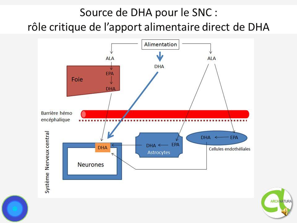 DHA et système nerveux central DHA est lun des constituants fondamentaux du SNC : 15 à 20 % du cortex cérébral Teneur au niveau du cortex et de la rétine : DHA vs EPA Principalement incorporés dans les membranes des neurones sous forme de phosphatides Taux élevés au niveau des synapses