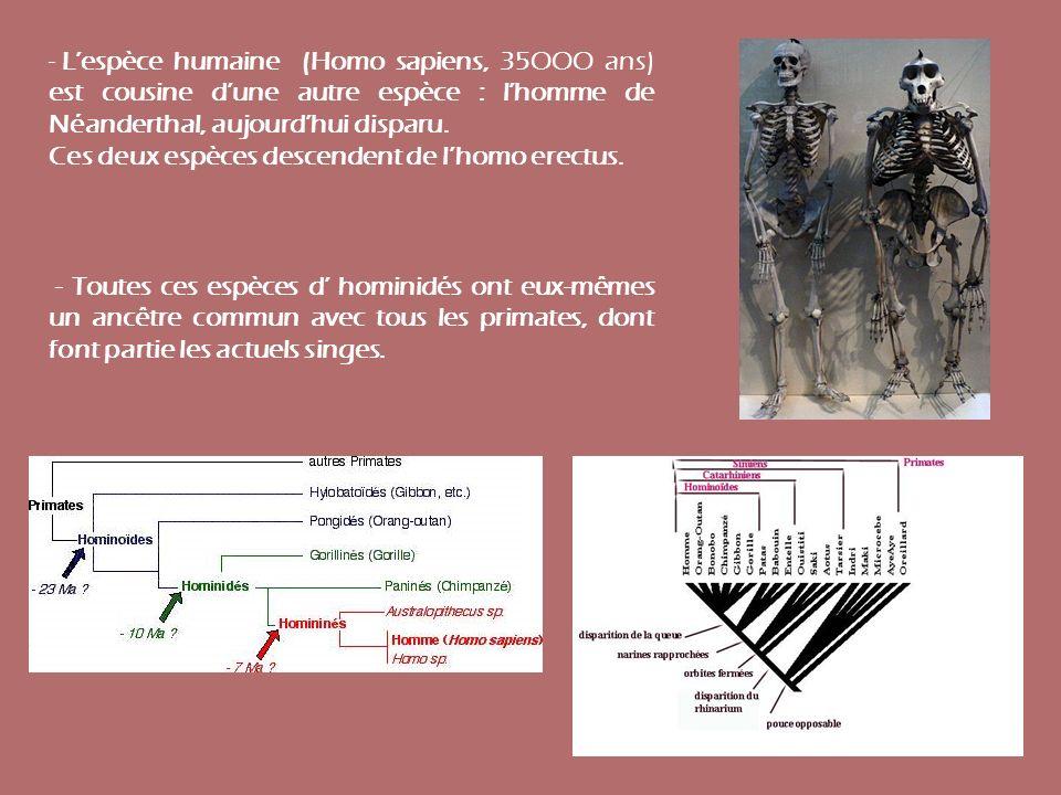 - Lespèce humaine (Homo sapiens, 35OOO ans) est cousine dune autre espèce : lhomme de Néanderthal, aujourdhui disparu. Ces deux espèces descendent de
