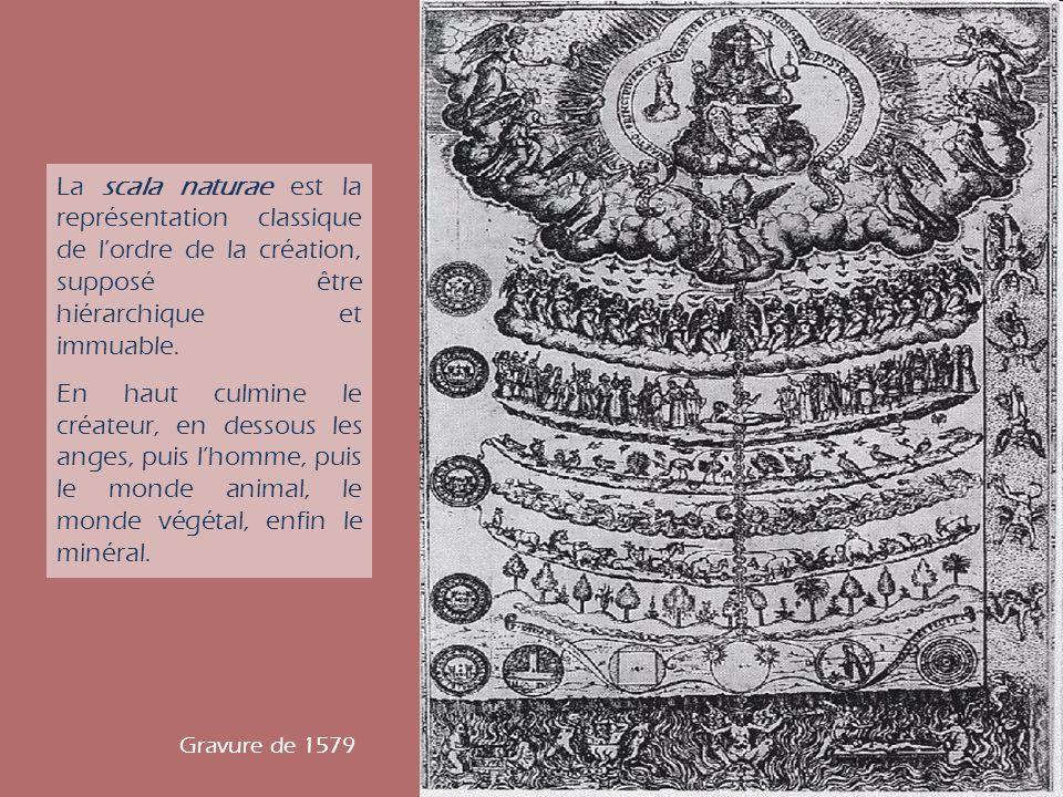 La scala naturae est la représentation classique de lordre de la création, supposé être hiérarchique et immuable. En haut culmine le créateur, en dess