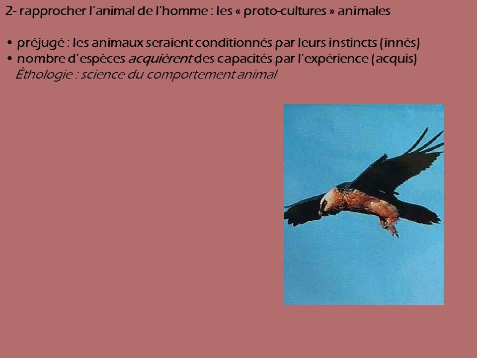 2- rapprocher lanimal de lhomme : les « proto-cultures » animales préjugé : les animaux seraient conditionnés par leurs instincts (innés) nombre despè