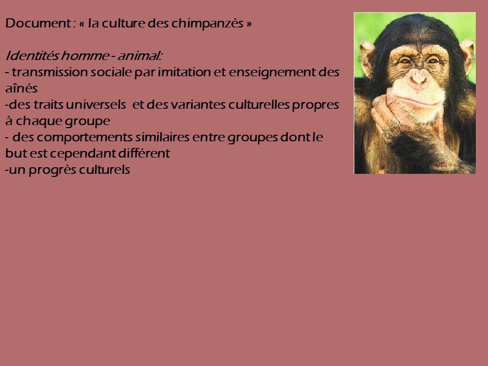 Document : « la culture des chimpanzés » Identités homme - animal: - transmission sociale par imitation et enseignement des aînés -des traits universe