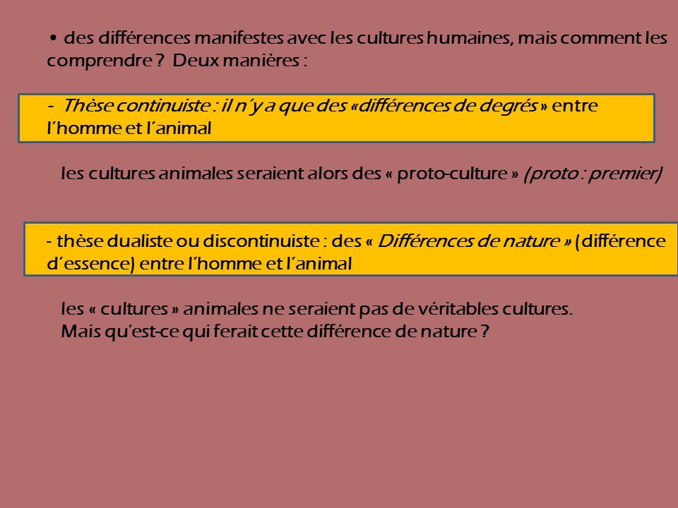 des différences manifestes avec les cultures humaines, mais comment les comprendre ? Deux manières : - Thèse continuiste : il ny a que des «différence