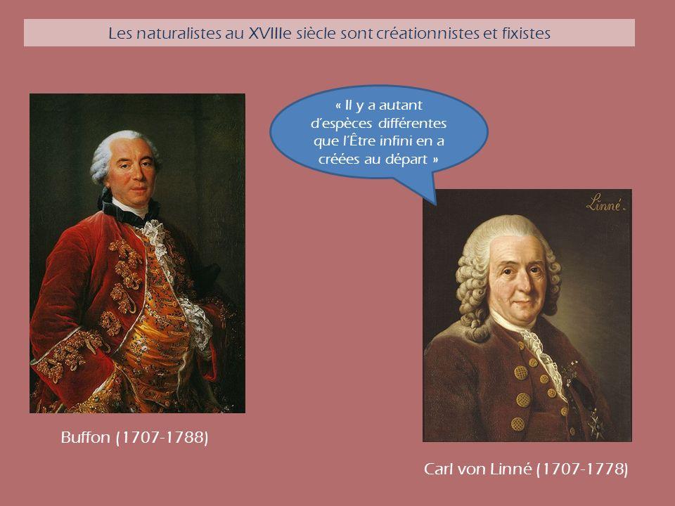 Carl von Linné (1707-1778) « Il y a autant despèces différentes que lÊtre infini en a créées au départ » Buffon (1707-1788) Les naturalistes au XVIIIe