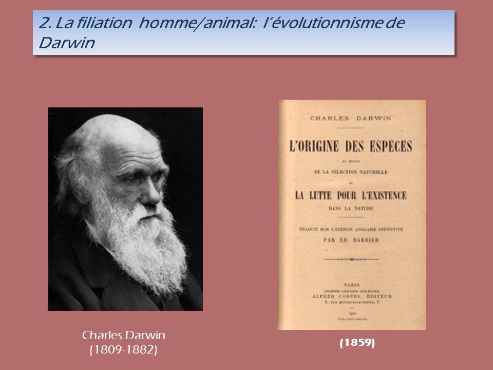 2. La filiation homme/animal: lévolutionnisme de Darwin (1859) Charles Darwin (1809-1882)