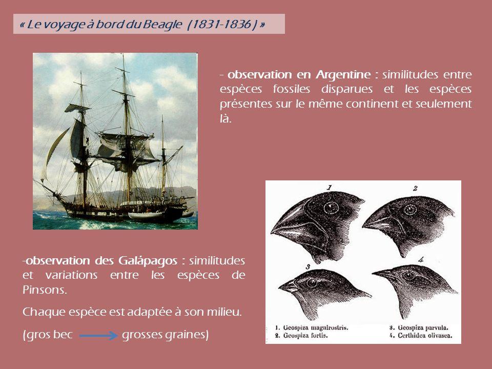 - observation en Argentine : similitudes entre espèces fossiles disparues et les espèces présentes sur le même continent et seulement là. -observation