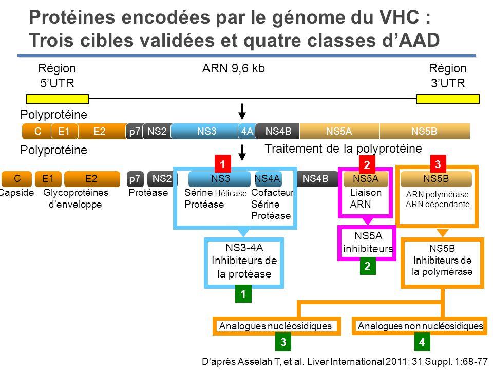 Protéines encodées par le génome du VHC : Trois cibles validées et quatre classes dAAD Région 5UTR Région 3UTR ARN 9,6 kb Polyprotéine Traitement de l