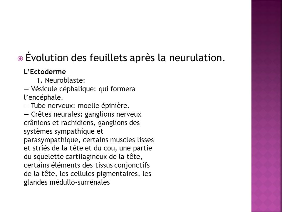 Évolution des feuillets après la neurulation. LEctoderme 1. Neuroblaste: Vésicule céphalique: qui formera lencéphale. Tube nerveux: moelle épinière. C
