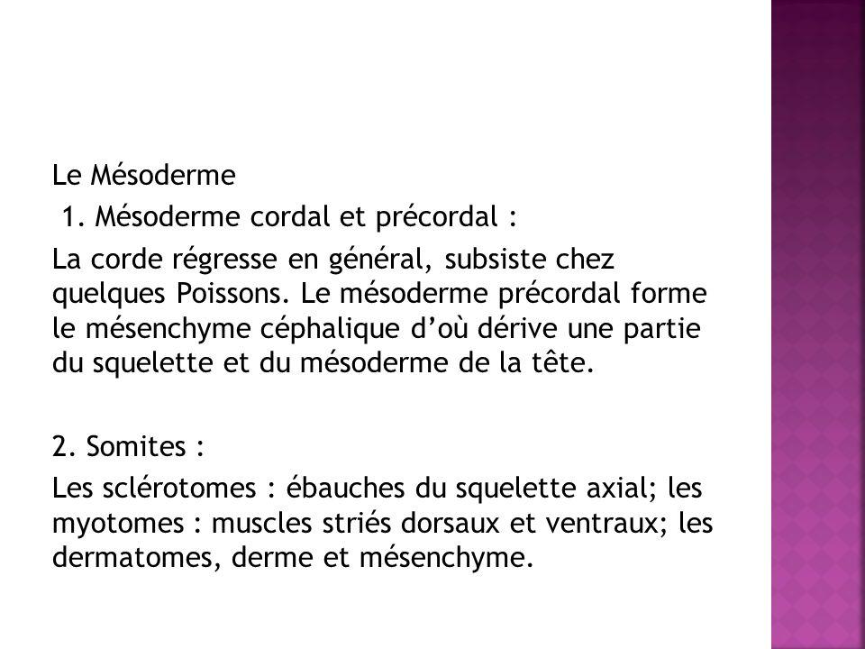Le Mésoderme 1. Mésoderme cordal et précordal : La corde régresse en général, subsiste chez quelques Poissons. Le mésoderme précordal forme le mésench