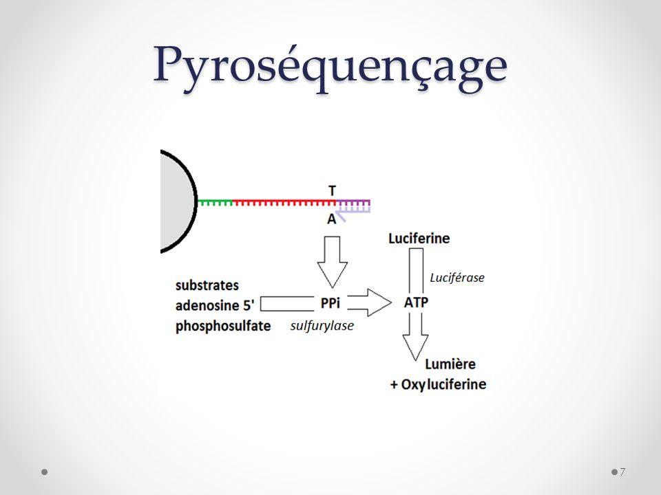 Pyroséquençage 7