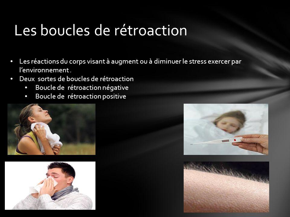 Les boucles de rétroaction Les réactions du corps visant à augment ou à diminuer le stress exercer par lenvironnement.