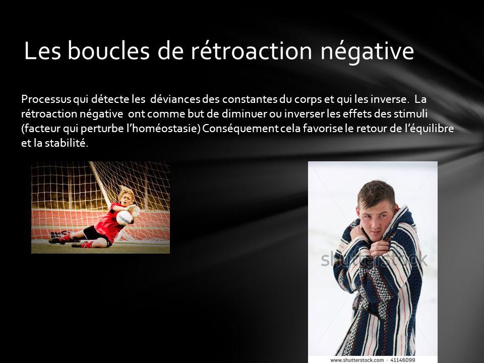 Les boucles de rétroaction négative Processus qui détecte les déviances des constantes du corps et qui les inverse.