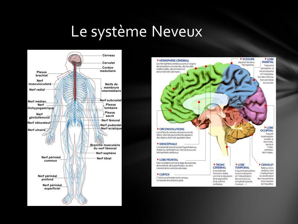Le système Neveux