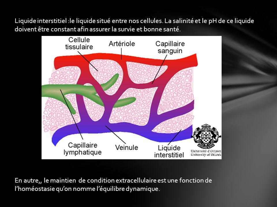 Liquide interstitiel :le liquide situé entre nos cellules.