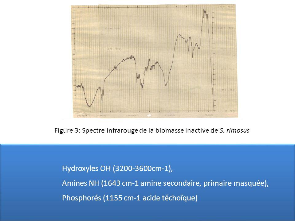 Figure 3: Spectre infrarouge de la biomasse inactive de S. rimosus Hydroxyles OH (3200-3600cm-1), Amines NH (1643 cm-1 amine secondaire, primaire masq