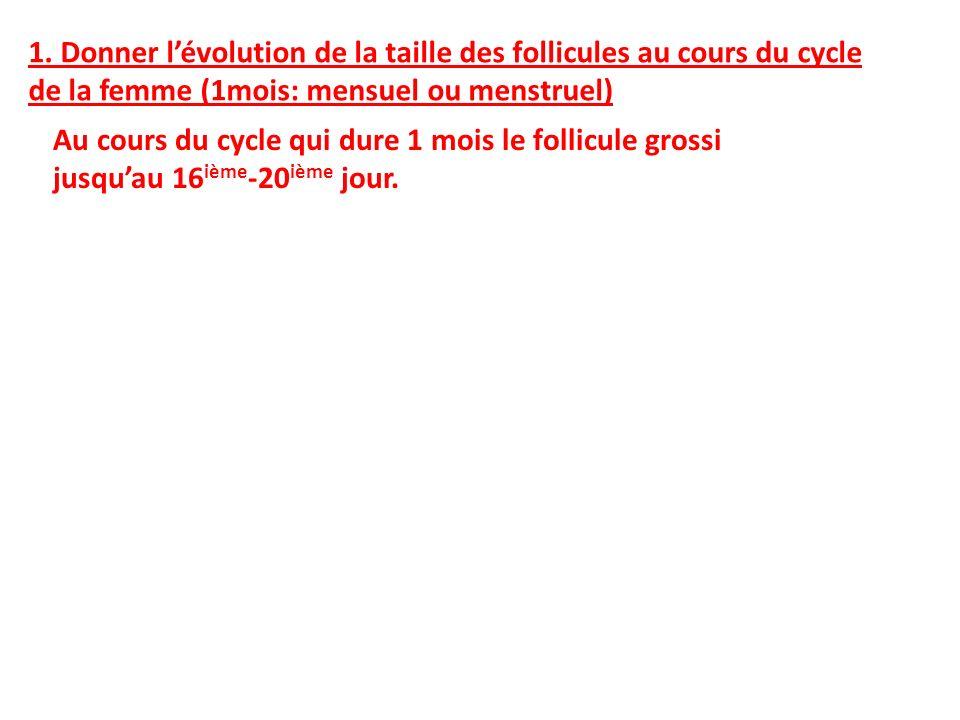 1. Donner lévolution de la taille des follicules au cours du cycle de la femme (1mois: mensuel ou menstruel) Au cours du cycle qui dure 1 mois le foll