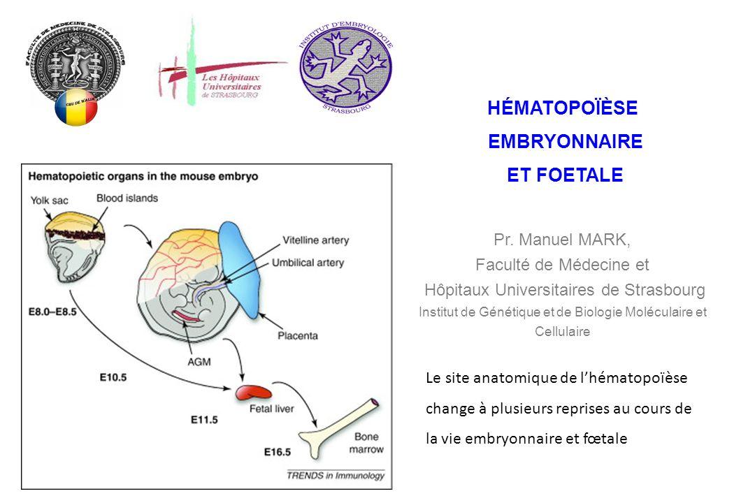 Le site anatomique de lhématopoïèse change à plusieurs reprises au cours de la vie embryonnaire et fœtale HÉMATOPOÏÈSE EMBRYONNAIRE ET FOETALE Pr. Man
