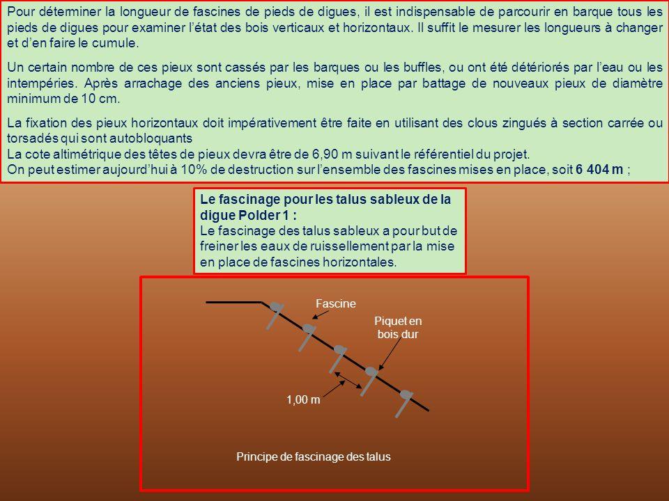 1,00 m Fascine Piquet en bois dur Principe de fascinage des talus Pour déterminer la longueur de fascines de pieds de digues, il est indispensable de