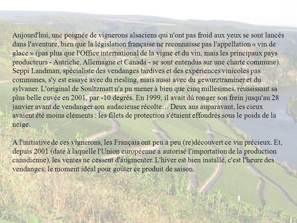 Aujourd'hui, une poignée de vignerons alsaciens qui n'ont pas froid aux yeux se sont lancés dans l'aventure, bien que la législation française ne reco
