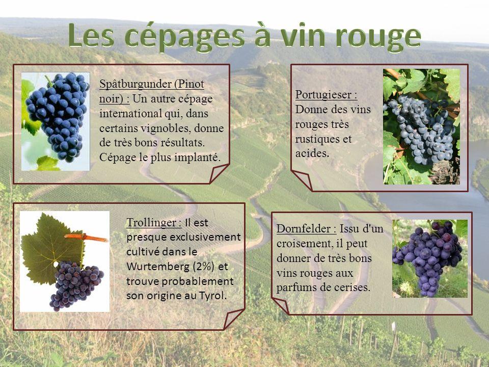 Spâtburgunder (Pinot noir) : Un autre cépage international qui, dans certains vignobles, donne de très bons résultats. Cépage le plus implanté. Portug