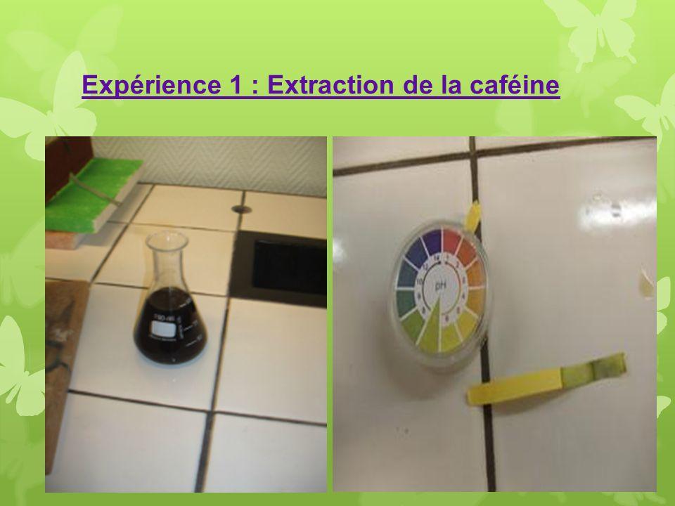 Expérience 1 : Extraction de la caféine